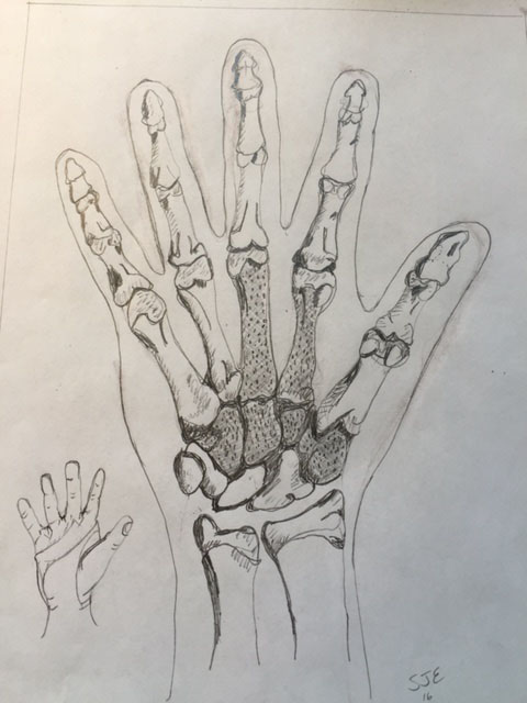 "An illustration by Edwards that will appear in the new edition of her book ""Developmental & Functional Hand Grasps."""